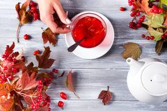 Une main du ` s de femme tient une tasse de thé chaud avec un viburnum sur un fond en bois gris avec l'espace de copie Vue supéri photos stock