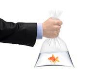 Une main retenant un sachet en plastique avec un poisson d'or Photographie stock