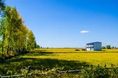 Une maison dans le domaine de riz sous le ciel bleu Image stock