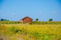 Une maison dans le domaine de riz sous le ciel bleu Photo stock