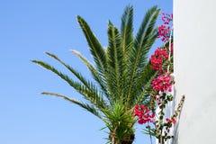 Une maison en béton grecque traditionnelle blanche avec un palmier photographie stock