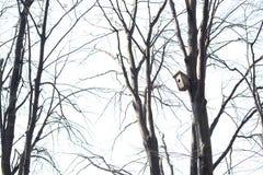 Une maison pour des oiseaux sur un arbre photos stock