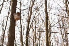 Une maison pour des oiseaux sur un arbre photo stock