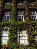 Une maison verte Photos libres de droits