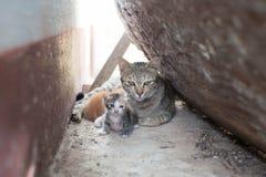 Une maman Photo libre de droits