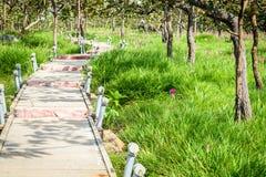 Une manière de promenade en Siam Tulip Field Photo libre de droits