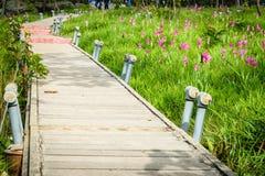 Une manière de promenade en Siam Tulip Field Photos libres de droits
