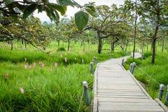 Une manière de promenade en Siam Tulip Field Photographie stock libre de droits