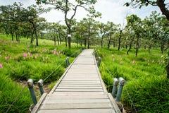 Une manière de promenade en Siam Tulip Field Images libres de droits