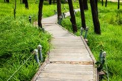Une manière de promenade en Siam Tulip Field Image libre de droits