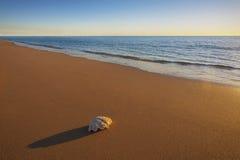 Une mer Shell sur la plage photo libre de droits