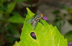 Une mouche étée perché sur une feuille dans le jardin photographie stock