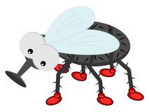 Une mouche avec des chaussures Image libre de droits