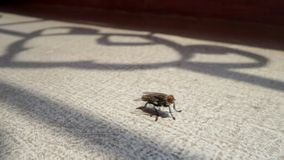 Une mouche sous l'ombre de fenêtre de fonte de fer Photo stock