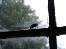 Une mouche sur un carreau de fenêtre Photos stock
