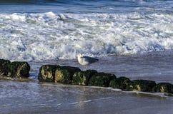 Une mouette à la Mer du Nord image libre de droits