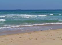 Une mouette argentée dans le sable Photos stock
