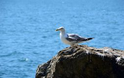 Une mouette blanche se tient sur une roche de la mer Photo stock