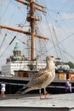 Une mouette dans le port. Images libres de droits