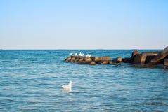 Une mouette flottant sur les vagues transparentes bleues de l'oce de lac de mer Photographie stock libre de droits