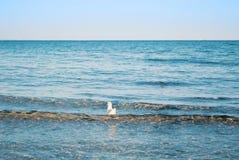 Une mouette flottant sur les vagues transparentes bleues de l'oce de lac de mer Photographie stock