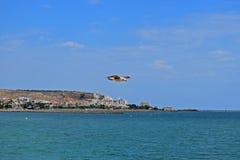Une mouette glissant près de la terre dans un ciel nuageux bleu photo stock