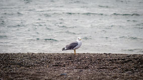 Une mouette regarde une tempête en mer Image stock