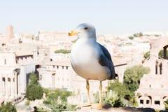 Une mouette se repose au-dessus de Rome Photos libres de droits