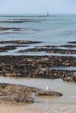 Une mouette se repose sur une plage (les Frances) Image stock