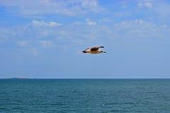 Une mouette volant au-dessus de la mer photo libre de droits