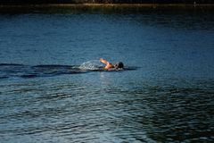 Une natation d'homme avec une brasse images libres de droits