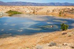 Une natation d'homme dans une piscine de désert image libre de droits