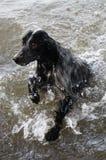 Une natation de chien en rivière Photos stock