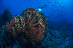 Une natation de plongeur autonome par un récif complètement des poissons Image stock