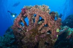 Une natation de plongeur vers une épave couverte dans le corail Photographie stock
