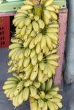 Une nature de plan rapproché de banane Images libres de droits