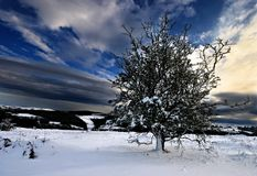 Une neige a couvert la haute d'arbre en fonction Photos stock