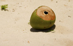 Une noix de coco abandonnée sur la plage Photo stock