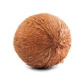 Une noix de coco dure sur un fond blanc Noix de coco tropicale Fruits exotiques pour des régimes savoureux Écrous pour les casse- images stock