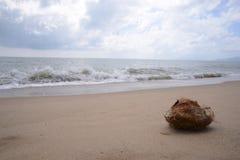 Une noix de coco sur une plage sablonneuse à l'Australie de cairns Image stock