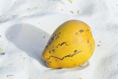 Une noix de coco tombée d'un palmier se trouve sur le sable, plan rapproché Photos libres de droits
