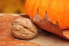 Une noix sous une lame Image libre de droits