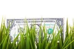 Une note du dollar dans l'herbe Images stock