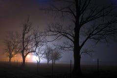 Une nuit brumeuse s'est allumée par les lumières oranges et bleues indiquant une scène rampante avec les arbres nus Image stock