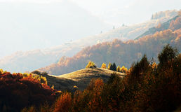 Une oasis de lumière au milieu de l'automne Photographie stock libre de droits