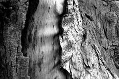 Une ondulation en bois âgé Images libres de droits
