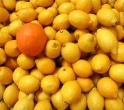 Une orange, beaucoup de citrons Images libres de droits