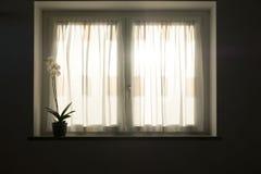 Une orchidée blanche sur un filon-couche de fenêtre au coucher du soleil images stock