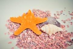Une ou un ensemble de plusieurs coquilles et étoiles de mer différentes sur petites pierres roses Photo libre de droits