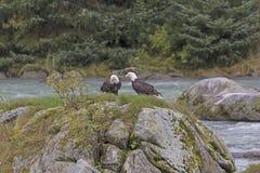Une paire d'Eagles chauve sur une roche en rivière Photos libres de droits